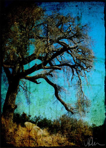 Brunt-oak