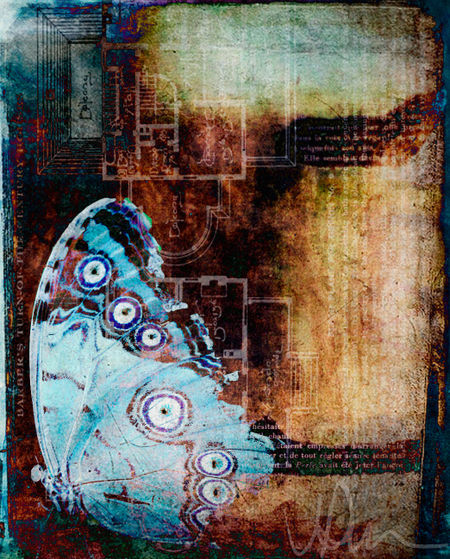 Butterfly-blue-print