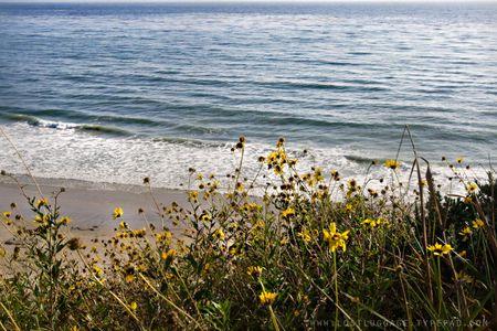 Wild-flower-beach