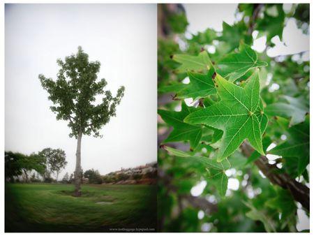 Tree-di