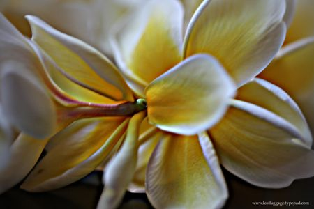 Lei-flower